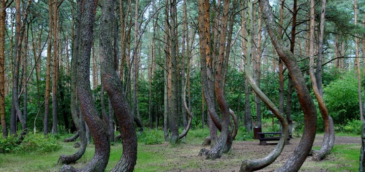 crooked-forest-866294_960_720