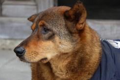 Good Looking Dog