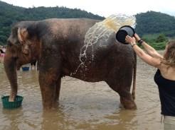 Kristin Butler Bathing Elephants