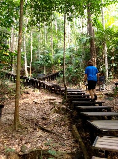 Stairs to Canopy Walk Taman Negara