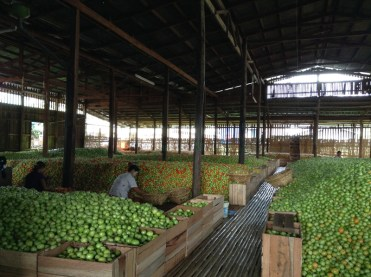 Tomato Warehouse Inle Lake Myanmar