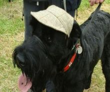 The Nonsuch Festivals of Dogs