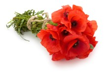 Blooming marvellous giveaway to take place in Edgware to commemorate WW1 Anniversary