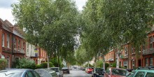 Explore the urban Forest: Walthamstow – awesome trees in E17