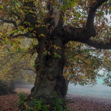 Stalking Trees: Beating the Bounds – Hampstead Heath