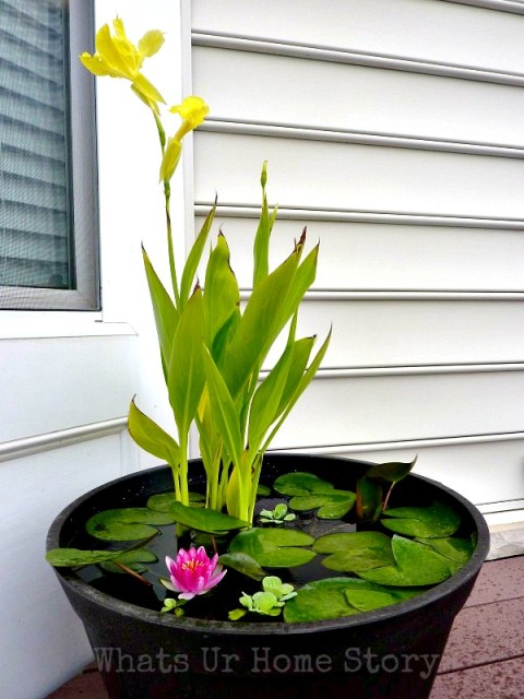 DIY-Container-Water-Garden, how-to-make-a water-gardens, container-water-garden-tutorial