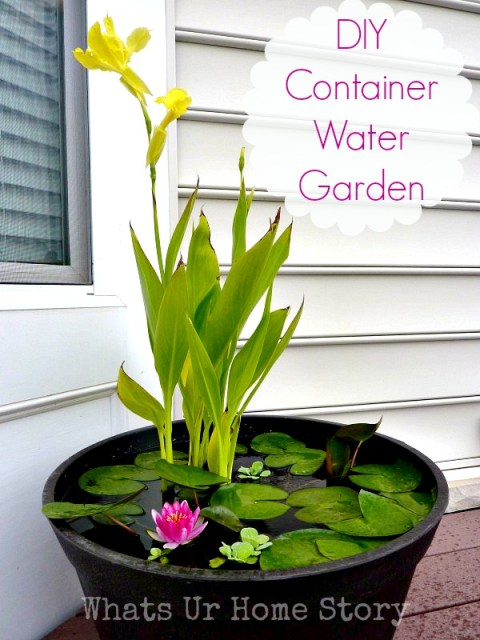 How to make a container water garden for your deck or patio. Use mosquito dunk and even fish to keep the mosquitos out and it WORKS! DIY-Container-Water-Garden