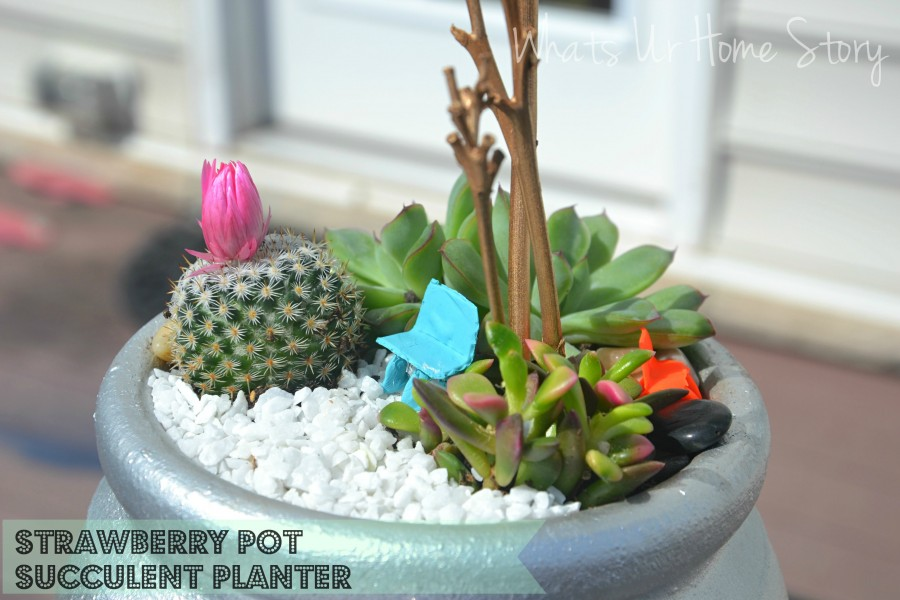 Whats Ur Home Story: strawberry pot succulent planter, strawberry pot planter