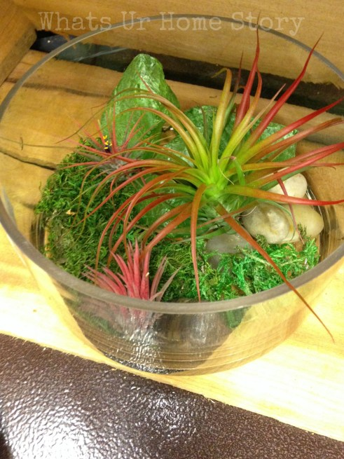 simple air plant terrarium