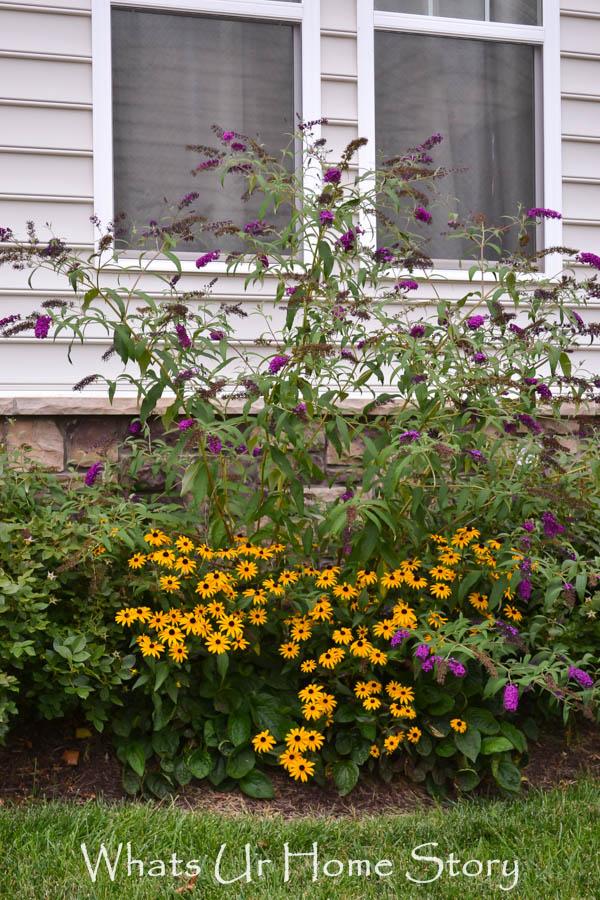 summer garden, back yard garden