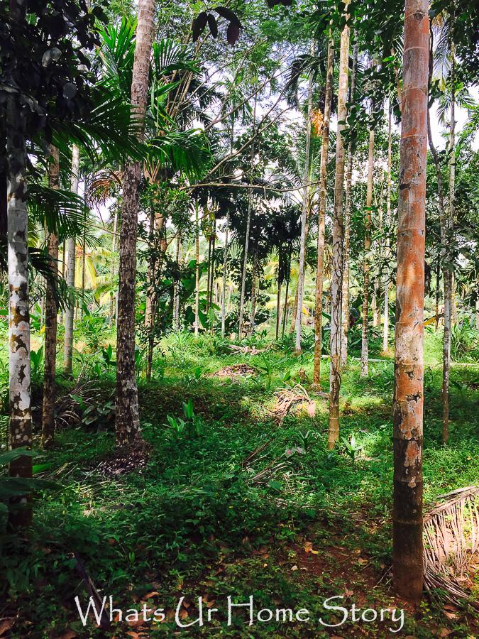 kerala during monsoon