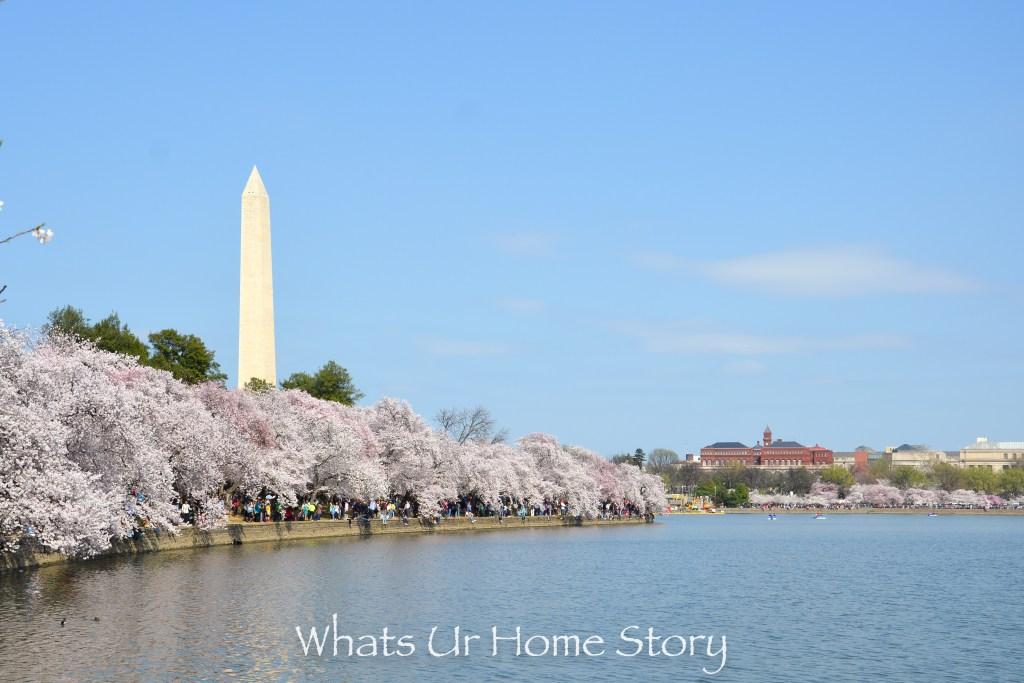 Cherry Blossom Festival 2016 Washington Monument