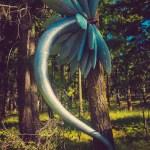 Illum Forest Day8