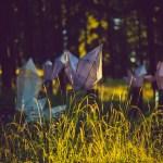 Illum Forest Daytime