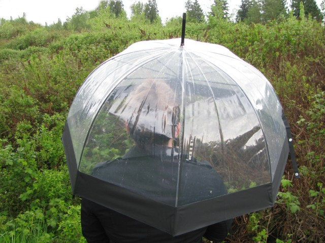 Bubble Umbrella Like Kate Middleton