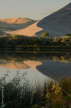 Dune reflections