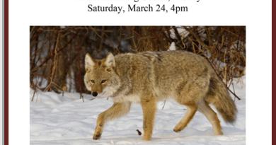 Tin Mountain Nature Programs Live Animal Prrgram Why Do Animals Do That? Sat, March 24, 4 PM