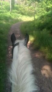 pony rides2