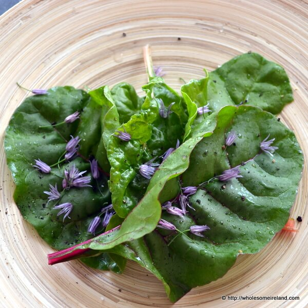 Baby Chard  Salad from Wholesome Ireland - Irish Food & Parenting Blog