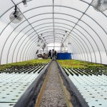 Grow Local: Bringing Aquaponics and Sustainable Farming to the Fox Valley