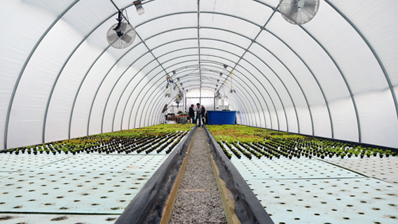 Grow Local Greenhouse