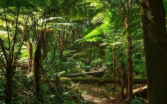 5f03e464de9523f5_640_rainforest
