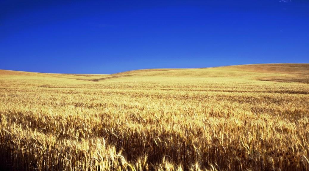 Kansas Farm Scenic Sky Clouds Wheat Farmland kansas-243079_1280