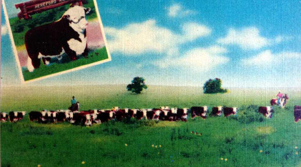 Typical Kansas ranch 2015-02-08 16.19.55