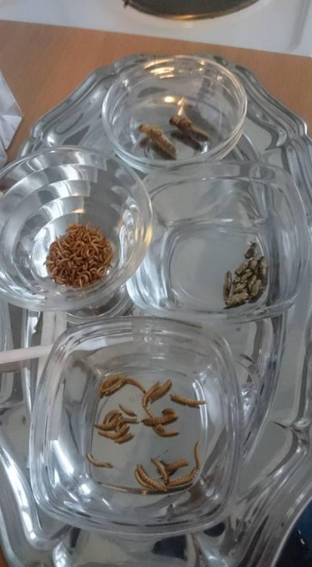 Snack-Insekten