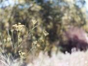 alergiaalpolen