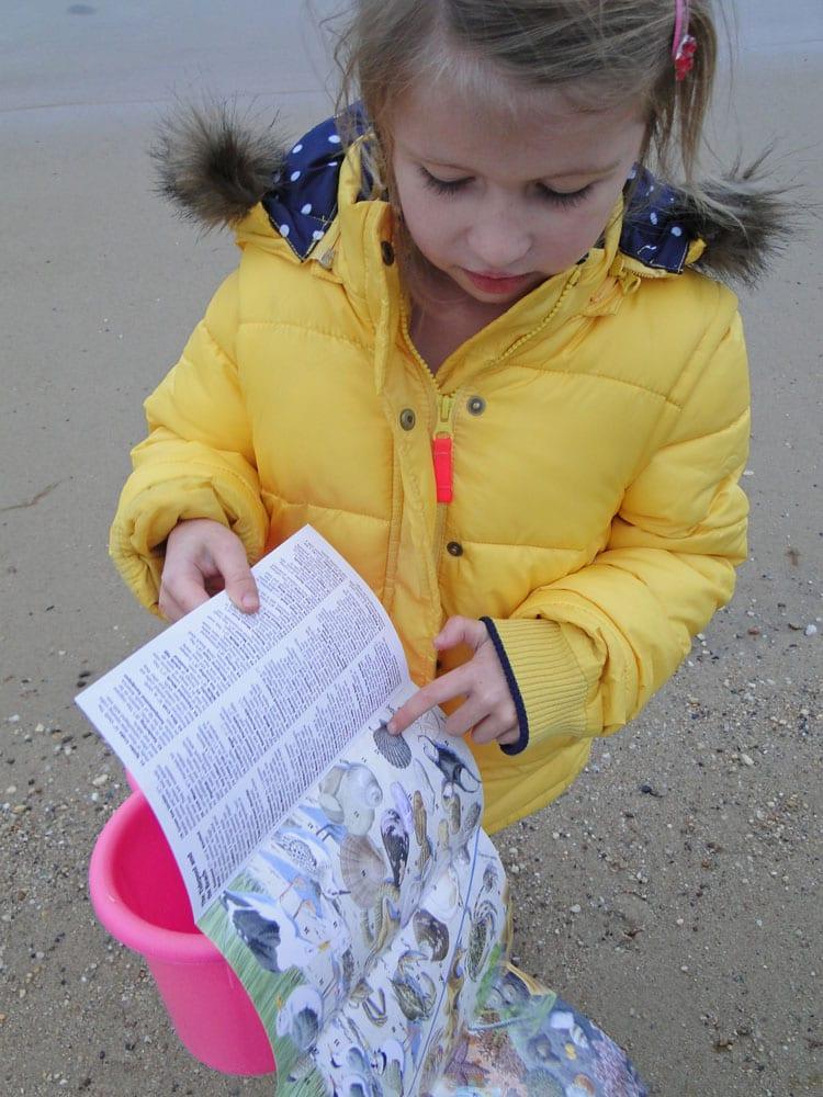 beachcombing guide
