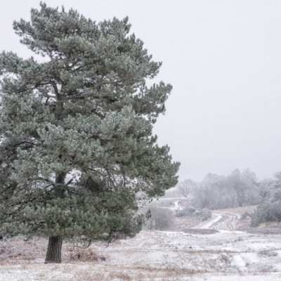 Snow in Ashdown Forest – and a token of love?