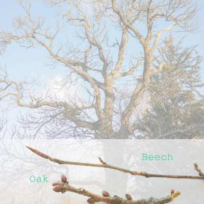Who's that tree? Free twigs & buds printable