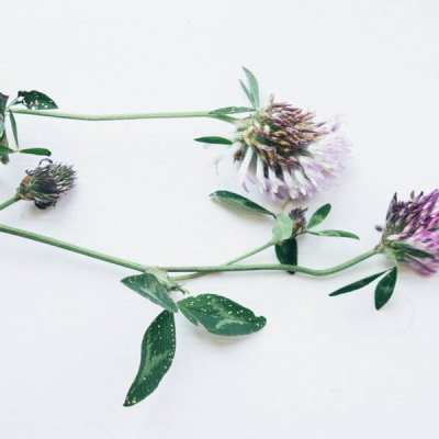 Wild flowers outside and inside