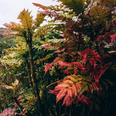 The November garden