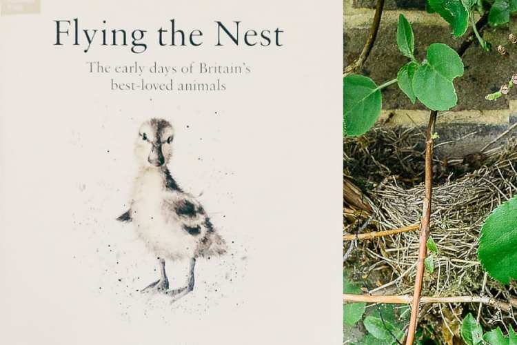 Flying the Nest – The Early Days of Britain's best loved animals