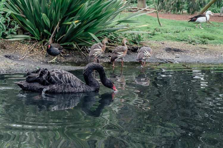 London Wetland Centre and why kids need to drink more water