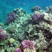 Air Pollution Stunts Coral Growth