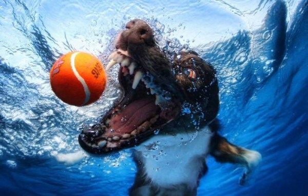 under-water-dogs-dive-funny-wildammo (10)