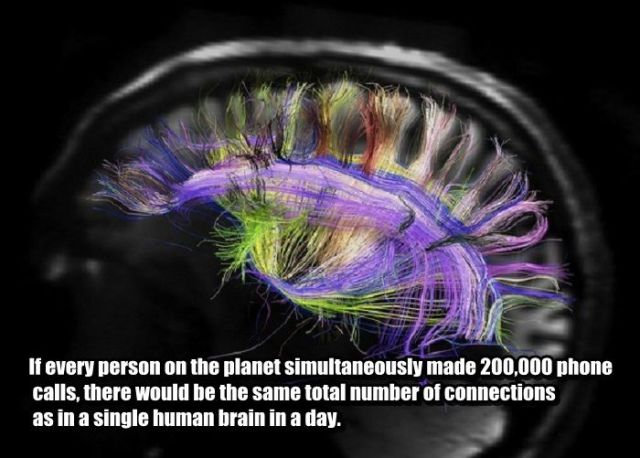 Time to Get Some Knowledge about Your Brain (25 Pics ) Wildammo (19)