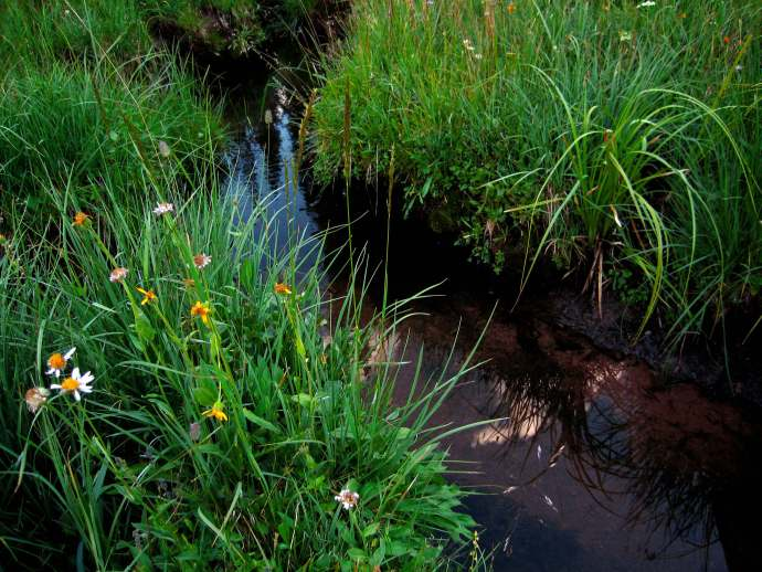 Wetland grasses in the Uinta Mountains