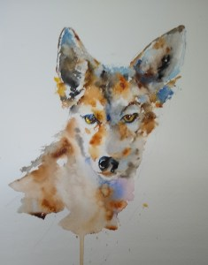 Song Dog (Coyote), w/c, 9″ x 7″, $150 (16″ x 13″ framed)  Matted Print 14″ x 11″, $25  Note Cards (available on request)