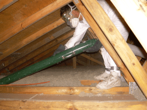 rats bring damage to the attic area