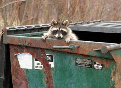 dumpster-raccoon