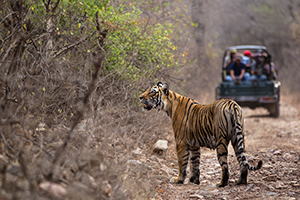 Ranthambore wildlife tours india