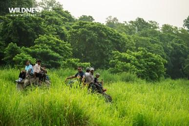Elephant safari at dudhwa tiger reserve