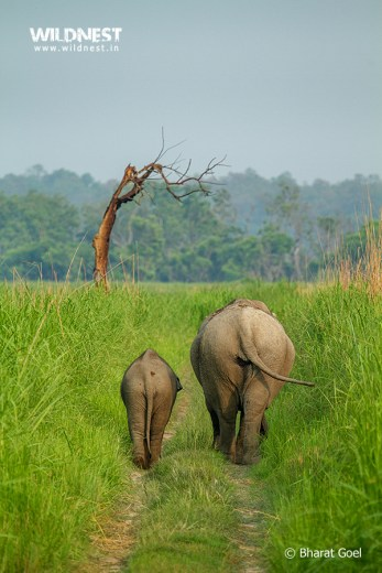 Elphant with baby at dudhwa tiger reserve