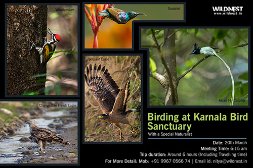 karnala bird sanctuary day tour mumbai