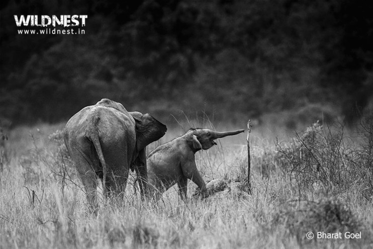 Elephant with cub at Corbett Tiger Reserve