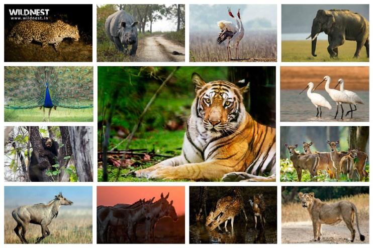 Wildlife Safari tours in India